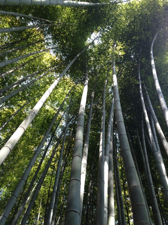 The Bamboo Path in Arashiyama