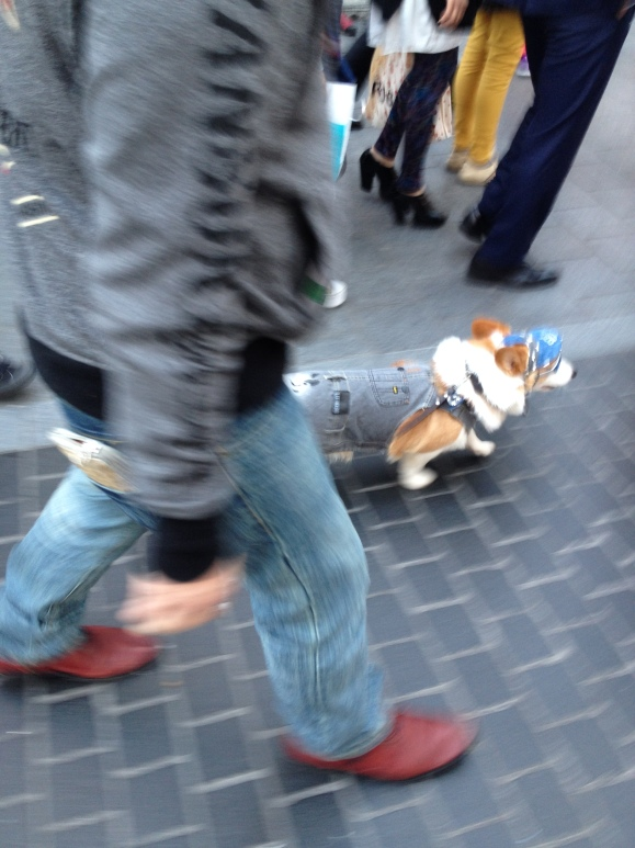Spotted this FANCY corgi down the Dotonbori. CRAY.