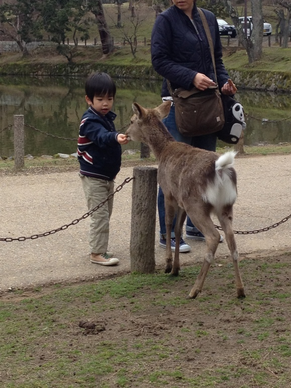 Little boy feeding a fawn at Nara Deer Park. Don't let their cute looks deceive you. These guys are SUPER aggressive the moment you buy those little crackers from the vendors. Butting their heads to you left and right and behind and front. And they bite your legs to get you to give them crackers. I didn't get any pics w/ them but I think Scott was able to snap photos of me squealing in terror. LOL!
